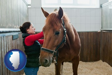 a horse and a horse owner in a boarding stable - with Illinois icon