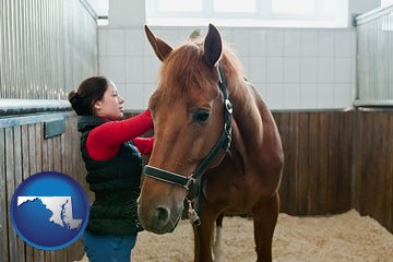 a horse and a horse owner in a boarding stable - with Maryland icon