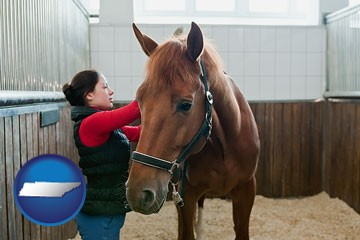 a horse and a horse owner in a boarding stable - with Tennessee icon