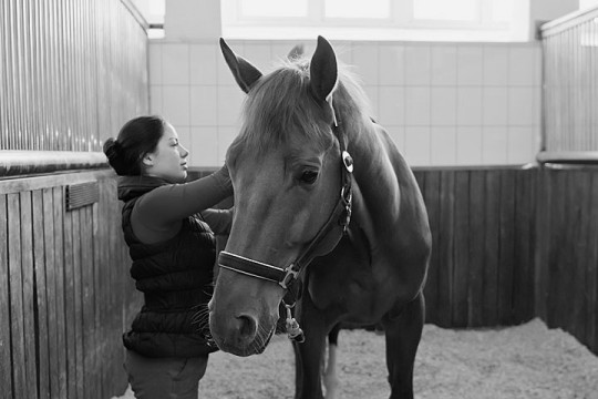 a horse and a horse owner in a boarding stable
